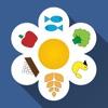 Диета 6 Лепестков: похудеть без диеты и похудение