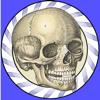 Speed Bones Lite (Quiz)