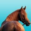 Horse Tracks Lite