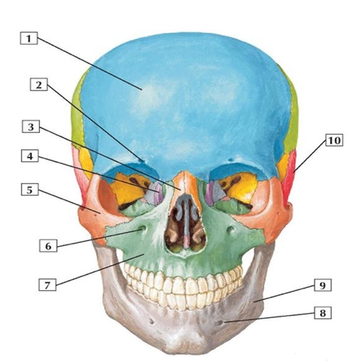 Anatomy Flashcard - App Store Revenue & Download estimates | PRIORI DATA