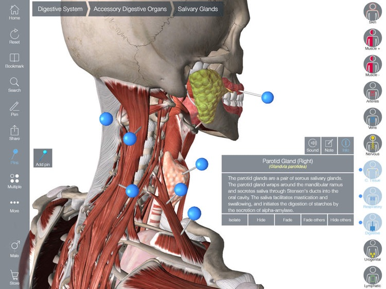 3d Anatomy Atlas Human Body Structure Physiology By Anna Mathe