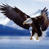 Ling - Lär dig läsa med coola bilder av djur/natur