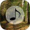 Forest Sounds - Forest Music,Sound Therapy