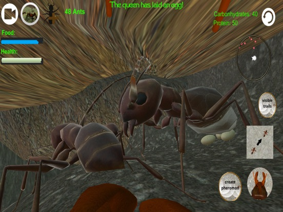 Ant Simulator 3D Screenshots