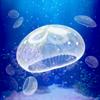 Hiroki Yamada - 癒しのクラゲ育成ゲーム(無料) アートワーク
