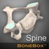 BoneBox - Spine Viewer