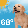 Puppy Weather Live