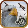 Sonidos Naturales De Aves