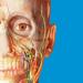 Human Anatomy Atlas 2017 - Complete 3D Human Body