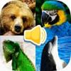 Tiergeräusche Bilder