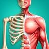 Menschlichen Körper Erforschen