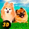 Pomeranian Dog City Wild Life