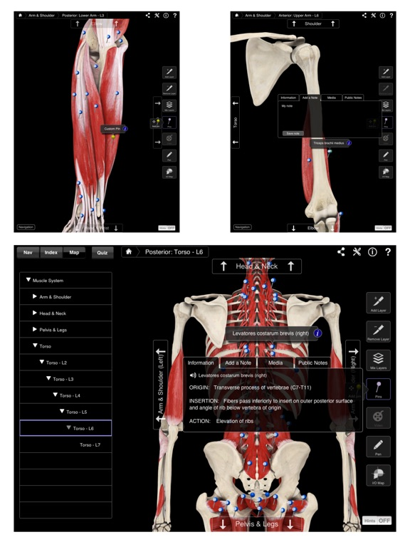 Muscle System Pro III Screenshots