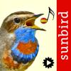 Cantos de Aves Id, guía para identificar pájaros