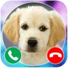 Call From Puppy Dog