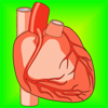 Heart Health: Heart Healthy Living Facts & Tips
