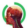 Arloon Anatomy