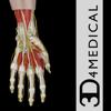 Hand & Wrist Pro III for iPad