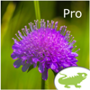 Alpenblumen bestimmen Pro