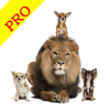 Animal Sounds Pro Farm Jungle Voices for Kids