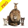 动物叫声音效专业版 - 认识狮子大自然界