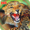 download Jurassic Animal Hunting Pro