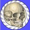 Icône : Speed Bones Lite (Quiz)