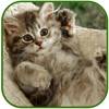Kitty Cat Jigsaw Puzzle Free For Kids And Adults