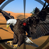 A  Eagle Shooting Wiki