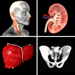 Quizz anatomique Pro