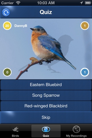 Bird Song Id USA Automatic Recognition Birds Songs screenshot 4