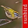 Vogel Id Schweiz, Vögel bestimmen im Garten + Wald