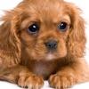可愛的動物寶寶 - 小狗、小貓、小兔及各種小動物