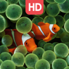 Live Aquarium HD Wallpapers | Backgrounds