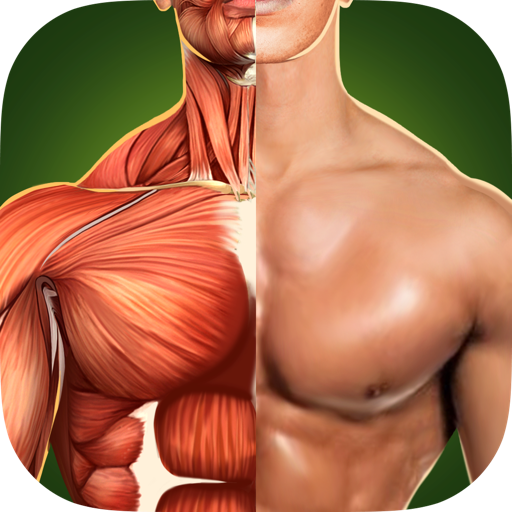 Human Anatomy 3D - Твоё Здоровое Тело