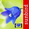 Blumen Id Automatik heimische Wildblumen bestimmen Wiki