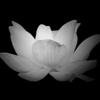 Lotus Philadelphia Wiki