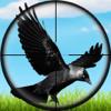 Real Jungle Birds Hunting