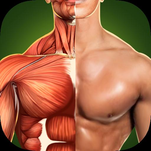 人体解剖学3D - 骨骼和肌肉