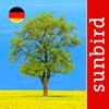 Baum Id Deutschland