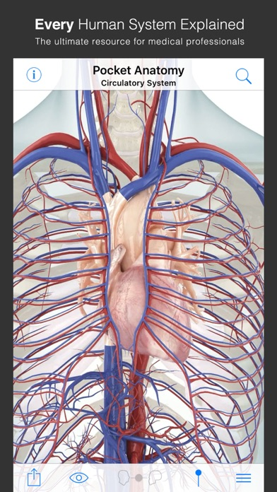 Pocket Anatomy (2018) screenshot 2