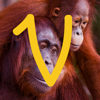 Virry Educational. Play, learn with real animals