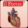 HEART -  Digital Anatomy