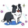 Cute Border Collie Dog Sticker
