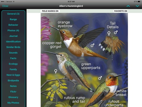 iBird Pro Guide to Birds screenshot 2