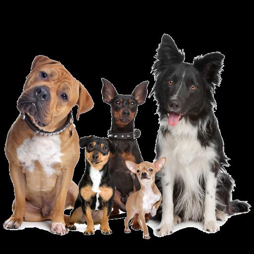 Made Simple! Dog Training Mac OS X