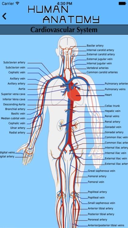 Human Body Atlas The Handiest Human Anatomy Atlas For Organ