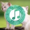 Cat Sounds Relax and Sleep: Calming music and gentle songs to relax and calm down for toddlers