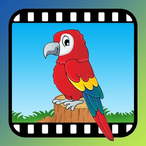 鸟类Video Touch