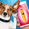 Dog Whistle - ultrasound. Train your dog with ultrasonic whistle